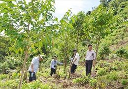 Khuyến khích trồng rừng gỗ lớn gắn với cấp chứng chỉ rừng quốc tế