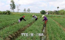 Quy định mới về quản lý, sử dụng đất trồng lúa