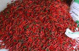 Malaysia dừng nhập khẩu ớt Việt Nam do dư lượng thuốc trừ sâu vượt ngưỡng