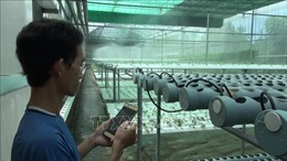 'Sống khoẻ' khi trồng rau thủy canh với 300 m2 đất bằng điện thoại thông minh