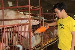 Đồng Nai: 'Bỏ ngỏ' kiểm soát môi trường tại hàng ngàn hộ chăn nuôi nhỏ lẻ