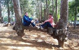 Hơn 550 triệu đồng bảo dưỡng hàng trăm cây cổ thụ quý ở Trà Vinh