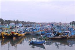 Bão số 9 suy yếu, Bình Thuận cho phép ngư dân ra biển hoạt động