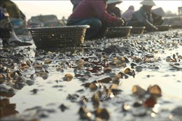 Chưa rõ nguyên nhân thủy sản chết trên diện rộng ở Nghệ An