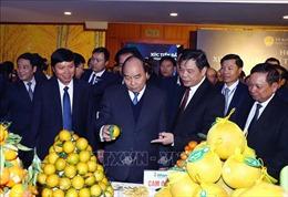 Thủ tướng kỳ vọng Hòa Bình vươn mình trở thành đầu tàu kinh tế vùng Tây Bắc