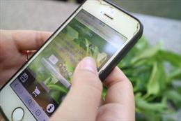 Phát hiện thừa, thiếu đạm cho cây trồng bằng điện thoại thông minh