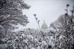 Ít nhất 5 người thiệt mạng do bão tuyết, mưa lớn tại bang California, Mỹ