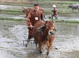Nô nức Lễ hội xuống đồng xây dựng nông thôn mới thị xã Phổ Yên