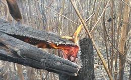 Cháy rừng keo tại huyện Bảo Lâm, Lâm Đồng