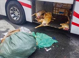 Xử lý hơn 220 kg thịt dê 'bẩn' chuẩn bị vào quán nhậu