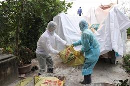 Quảng Ninh chôn huỷ khoảng 10.148 kg lợn bệnh 