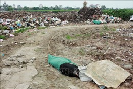 Thái Bình: Vứt xác lợn bừa bãi, tiêu hủy không đúng quy trình
