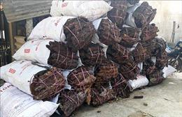 Ẩn số việc người dân bóc trộm vỏ cây thông để bán cho thương lái