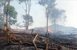 Lai Châu thiệt hại hơn 16 ha rừng do cháy