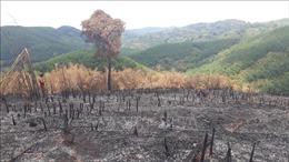 Khoảng 10ha rừng tái sinh tại Bình Phước bị chặt phát, đốt rụi