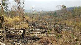 Kỷ luật giám đốc công ty lâm nghiệp để xảy ra khai thác rừng trái phép