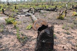 Để rừng bị phá, lãnh đạo đồn biên phòng chỉ... rút kinh nghiệm