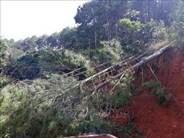 Xử lý nghiêm người đứng đầu đơn vị, địa phương xảy ra ken cây, phá rừng