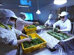 6 tháng, xuất khẩu rau quả tăng 3,9%