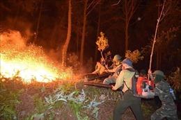 Huy động trên 500 người khống chế vụ cháy rừng ở núi Nầm, Hà Tĩnh
