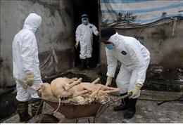 Gần 150 tỷ đồng hỗ trợ các hộ dân bị dịch tả lợn châu Phi ở Nam Định