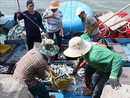 Ngư dân Quảng Trị vượt khó vươn khơi bám biển