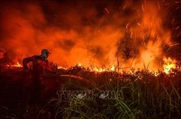 Indonesia sẽ hỗ trợ tài chính để huy động máy bay không người lái dập tắt cháy rừng