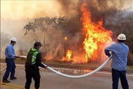 Gần 2 triệu ha rừng Amazon bị hàng nghìn đám cháy 'thiêu đốt'