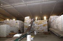 Nông, lâm, thủy sản xuất siêu hơn 6 tỷ USD