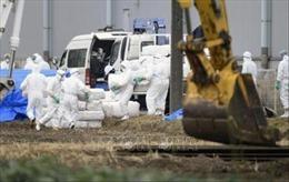 Tiêm vaccine để ngăn dịch tả lợn bùng phát tại Nhật Bản