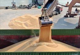 Bloomberg: Trung Quốc miễn áp thuế đối với một số đậu tương Mỹ nhập khẩu