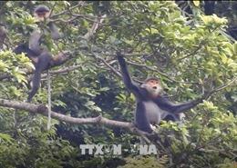 Hài hòa giữa sinh kế của con người và sinh cảnh của động vật quý hiếm