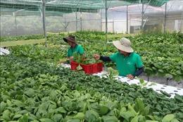 Khẳng định vai trò của Hội Nông dân, hướng tới xây dựng nền nông nghiệp thịnh vượng