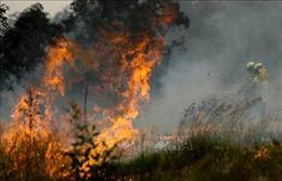 Thêm 50 ngôi nhà bị phá huỷ do cháy rừng ở Australia