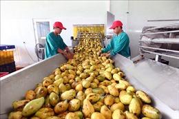 Thực thi EVFTA: Khẳng định chất lượng nông sản Việt