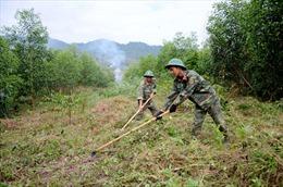Bộ đội Đắk Nông trồng rừng phủ xanh đất trống đồi trọc