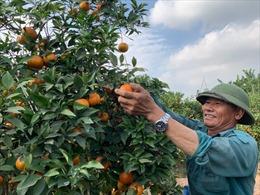 Tạo vùng sản xuất lớn đi cùng với xây dựng thương hiệu hàng nông sản