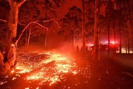 Khói cháy rừng Australia lan sang cả New Zealand