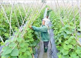 Luật Trồng trọt có hiệu lực giúp gắn sản xuất với công nghiệp chế biến nông sản