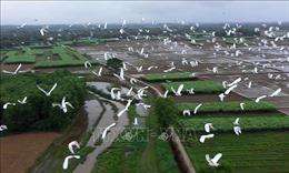 Thích thú ngắm những đàn chim, cò bay về trú ngụ tại Thừa Thiên Huế