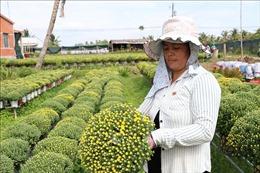 'Vị mặn' chợ hoa xuân Bến Tre