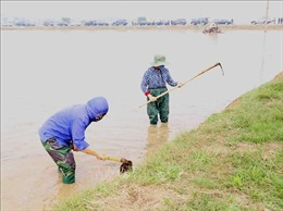 Gần 54% diện tích đã có nước để gieo cấy vụ Đông Xuân