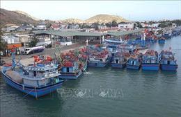 Nhiều tàu cá ở Ninh Thuận phải nằm bờ dài ngày