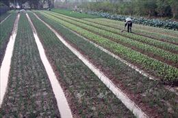 Miễn thuế sử dụng đất nông nghiệp giúp người dân gắn bó với ruộng đồng
