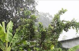 Mưa lớn cứu cây trồng bị hạn hán nghiêm trọng ở Trung, Nam Bộ