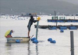 Cảnh báo dấu hiệu bất thường môi trường nước ở một số vùng nuôi tôm hùm tại Phú Yên