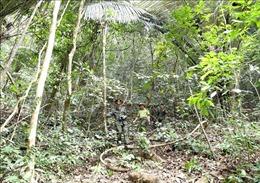 Quản lý rừng bền vững - Bài 1: Giao đất, giao rừng-giải pháp đảm bảo đất lâm nghiệp có chủ