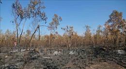 Xác định nguyên nhân các vụ cháy rừng trồng tại Khánh Hòa