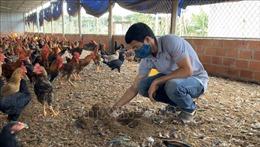 Mô hình nuôi gà trên đệm lót sinh học cho thu nhập 400 triệu đồng/năm
