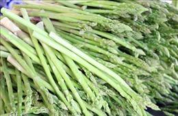 Mô hình trồng măng tây xanh trên vùng 'sa mạc' Ninh Thuận